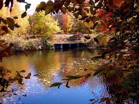 lago-y-floresph.jpg