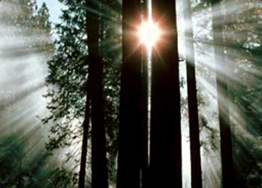 luz-entre-arboles.jpg