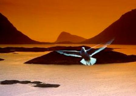 pajaro-volando-sobre-pantano.jpg