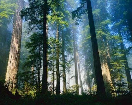 pop_trees_3.jpg
