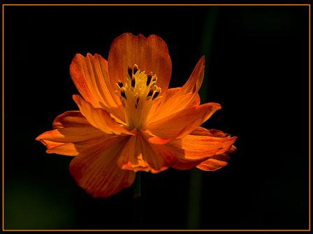 flor-en-negro